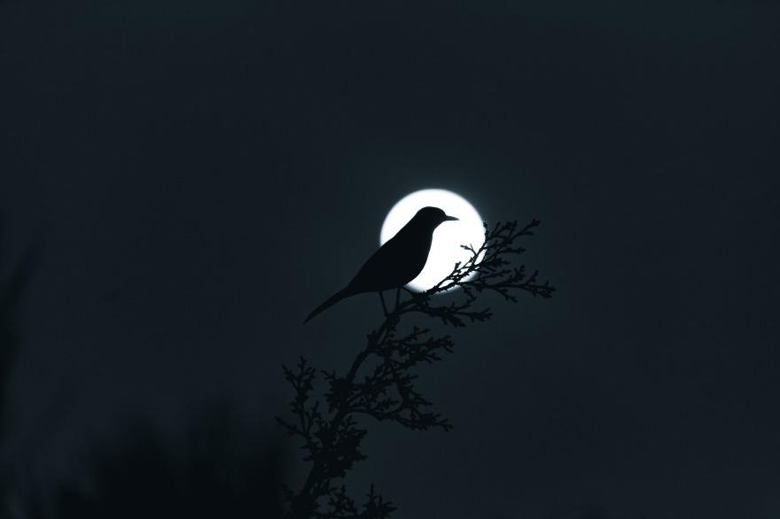 moon-4013530_1920