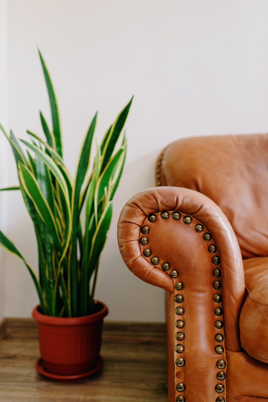modern leather sofa near potted plant in house